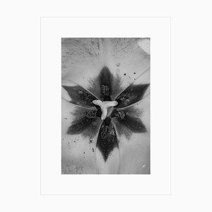Anna Agoston - Ohne Titel # 120 2014