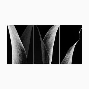 Original Triptych Fotografie von Cyrille Druart