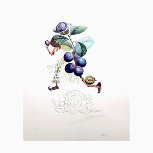 Plum Hand-Signed Lithograph by Salvador Dali, 1969