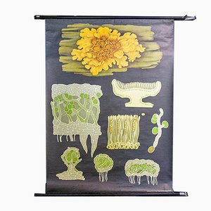 Vintage Yellow Botanical School Poster from Jung Koch Quentell, 1950s