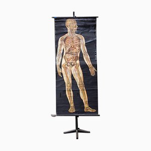 Póster antiguo sobre la anatomía humana, década de 1900