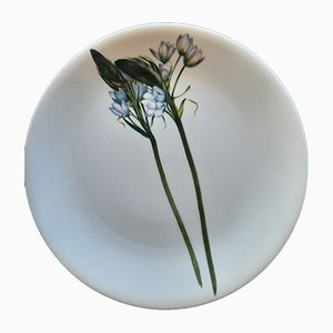 Porcelain Plates from Driade, 1990s, Set of 6