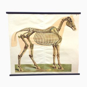 Antique Equestrian Veterinary School Poster from Kluwer