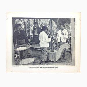 Antiker Niederländischer Ostindien Fotografie-Druck in Schwarz & Weiß von Jean Demmeni für Kleynenberg & Co., 1913