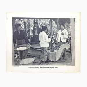 Antique Black and White Dutch East Indies Photo Print by Jean Demmeni for Kleynenberg & Co., 1913