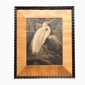 Framed Print of 2 Herons