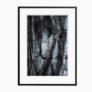 Stampa Pigmentata Conifer Bark bianca e nera di Tim Graham