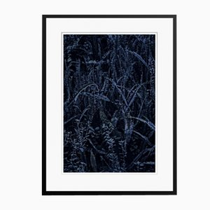 Dark Fern Oversize Archival Pigment Print Framed in Black by Stuart Möller
