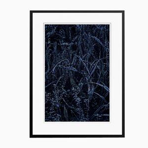 Stampa a pellicola o tessuto a foglie scure di Fern Felce incorniciata di Stuart Möller