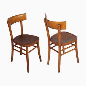 Chaises de Salon Mid-Century de ISA Bergamo, 1950s, Set de 6