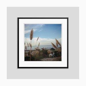 Pebble Beach Oversize C Print in Schwarz von Slim Aarons