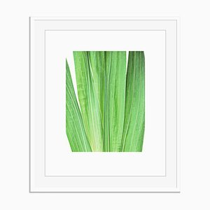 Untitled 1 from White Color Oversize Archival Pigment Print Framed in White by Fleur Olby