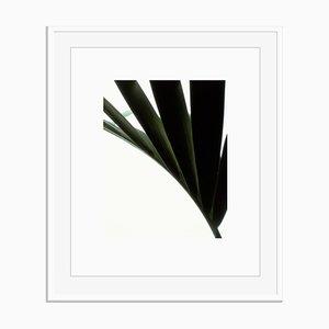 Untitled 03 von White Color Oversize Pigment Gallery Print in Weiß von Fleur Olby