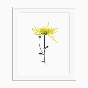 Untitled 04 von White Color Oversize Pigment Printed Print in Weiß von Fleur Olby