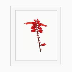 Senza titolo 05 di White Color Oversize Archival Pigment Print Framed in White di Fleur Olby