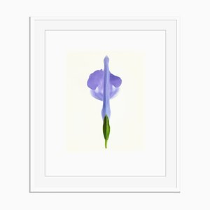 Untitled 07 from White Color Oversize Archival Pigment Print Framed in White by Fleur Olby