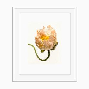Senza titolo 08 di White Color Oversize Archival Pigment Print Framed in White di Fleur Olby