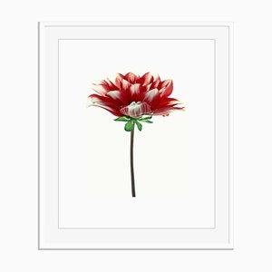Stampa untitled 10 di White Colour di Oversize Archival Pigment Print Framed in White di Fleur Olby