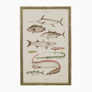 Large Antique Austrian Lithography of Colorful Fish, 1885