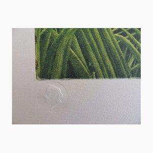 Lithographie Paysage Tropical d'après Le Douanier Rousseau