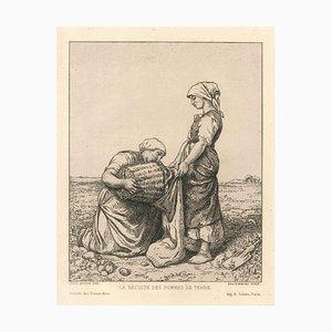 La récolte des pommes de terre-Original Etching After J. Breton by F. Braquemond 1868