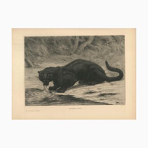 Black Panther - Original Etching and Aquatint by Evert van Muyden - 1901