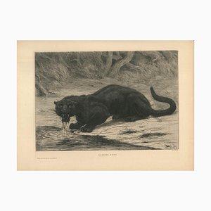 Black Panther - Original Radierung und Aquatinta von Evert van Muyden - 1901