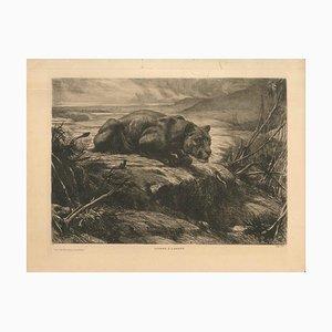 Lionne à l'affût - Originale Radierung und Aquatinta von Evert van Muyden - 1900