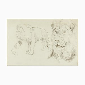 Foreground of a Lion - Original Pencil Drawing by Willy Lorenz - 1940s 1940s