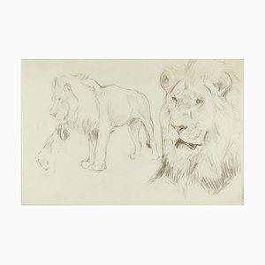 Primo piano di un leone - Disegno originale a matita di Willy Lorenz - anni '40