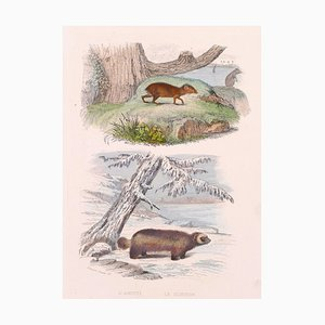 Rodents- Original Lithograph - Late 19th Century Late 19th Century