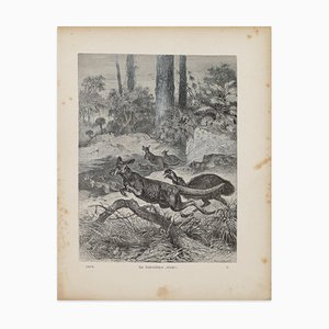 Cangaroos in Danger - original Lithograph by F. Specht - 1879 1879