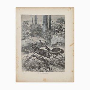 Cangaroos in Danger - original Lithographie von F. Specht - 1879 1879