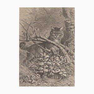 Litografía original con un gato escondido en el árbol - 1880 1880