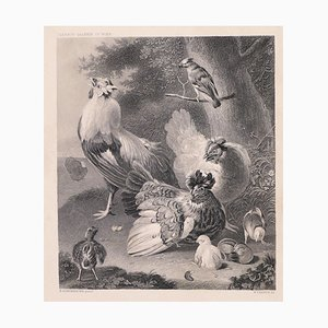 Chicken Family - Original Lithograph by W. French - Late 19th Century Late 19th Century