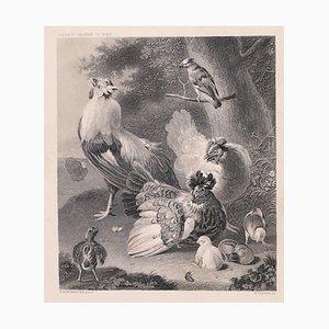 Litografía Chicken Family original de W. French - finales del siglo XIX