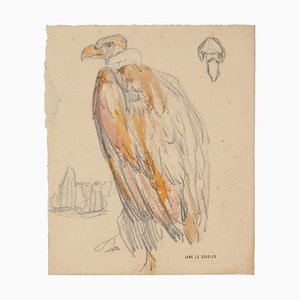 Vulture - Pencil and Pastel Drawing by Jane Le Soudier - Mid 20th Century Mid 20th Century