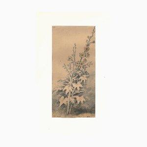Estudio Flora - Dibujo original de JP Verdussen - Finales del siglo XVIII