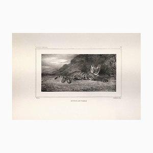Etude de Tigre 1832