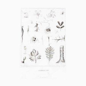 Planche 1 - Les Fleurs Animées Vol.II - Lithographie von JJ Grandville - 1847 1847