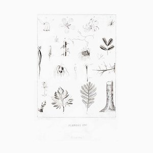 Planche 1 - Litografia Les Fleurs Animées Vol.II - Litografia di JJ Grandville - 1847-1847