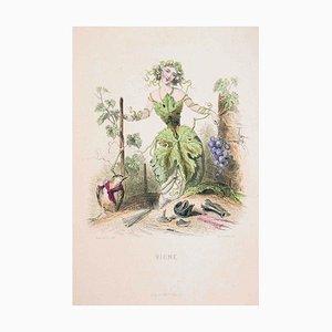 Vigne - Les Fleurs Animées Vol.II - Litho von JJ Grandville - 1847 1847