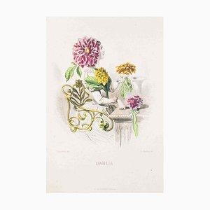 Dahlia - Les Fleurs Animées Vol.II - Lithograph by J.J. Grandville - 1847 1847