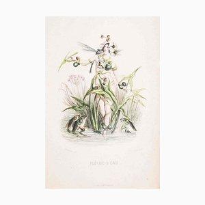 Flèche d'Eau - Les Fleurs Animées Vol.II - Lithograph by J.J. Grandville - 1847 1847