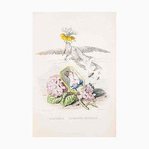 Hortensia Couronne Impériale - Les Fleurs - Lithograph by J.J. Grandville - 1847 1847