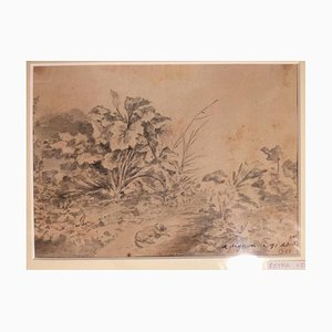 Dog with Plants - Original China Ink Drawing by Jan Pieter Verdussen - 1751 1751