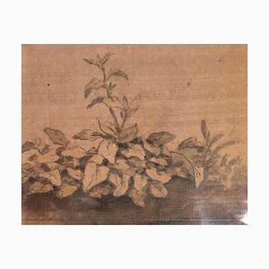 Plants - Original China Ink Drawing by Jan Pieter Verdussen - 1740 1740