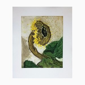 Sunflower - 1993 - Ferdinand Finne - Aquatint - Contemporary 1993