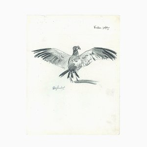 Vautour pape - Original Charcoal Drawing by Ray Lambert - Mid 20th 20th Century Mid 20th Century