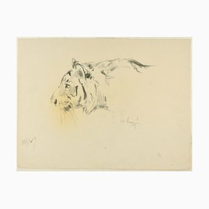 Profile of a Tiger - Original Charcoal Drawing by Willy Lorenz - 1940s 1940s